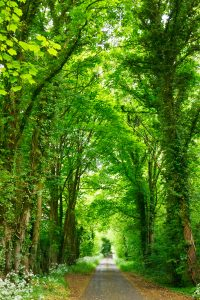 tree-lined alley pathway