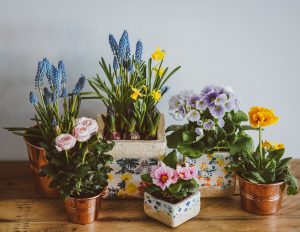 assorted spring flowers in pots